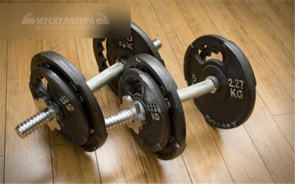 Программа тренировки в спортзале для похудения