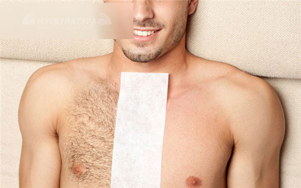 Волосы на груди у мужчины показатель сексуальности