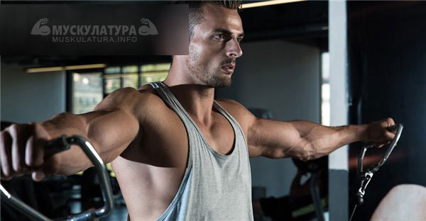 5 мощных упражнений на плечи, которые увеличат их в два раза | 312x600